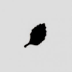 PED-26708 list 1  dierovač ozd. 1,6 cm