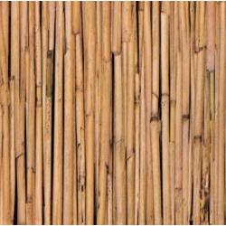 TAP - 10595 Tapeta Bamboo 67,5cm x 15m