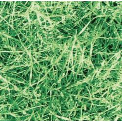 TAP - 11565 Tapeta Grass 67,5cm x 15m
